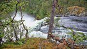 5DS_2980 Norwegen