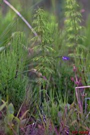 Pflanze - Norwegen