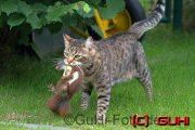 Katze mit Eichhörnchen, Lichtenrade