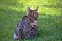 Katze auf der Jagt