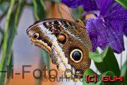 Schmetterling, Biosphäre Potsdam