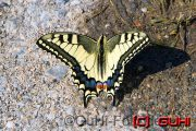 Schmetterling, Kroatien