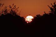 1DX20392 Sonnenaufgang Neuholland