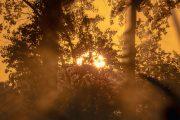 1DX24655 Neuholland Sonnenaufgang