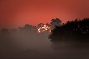 1DX28126 Neuholland Sonnenaufgang