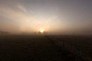 5DS_3808 Neuholland, Sonnenaufgang