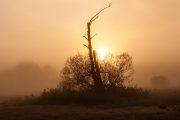 5DS_3811-2 Neuholland, Sonnenaufgang