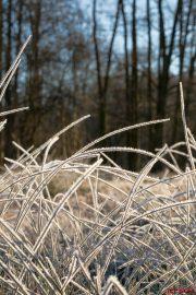 Reif und Gras - Spreewald Leipe