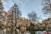 Wald im Spreewald