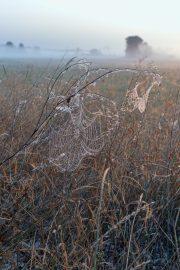 5DS_2006 - Spinnennetz