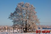 Baum Neuholland