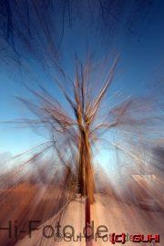 Baum, Lichtenrade