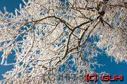 Baum im Winter, Neuholland