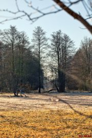 Wald - Spreewald - Leipe