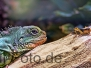 Reptilien und Lurche
