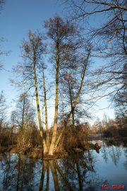 Spreewald Baum