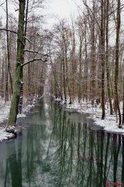 Spreewald -Leipe - Stich - Winter