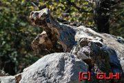 Wurzel und Stein, Kroatien