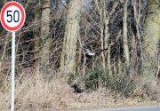 Falke ist zu schnell