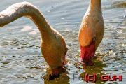 Vögel, Neuholland