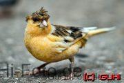 Partyvogel, Biosphäre Potsdam